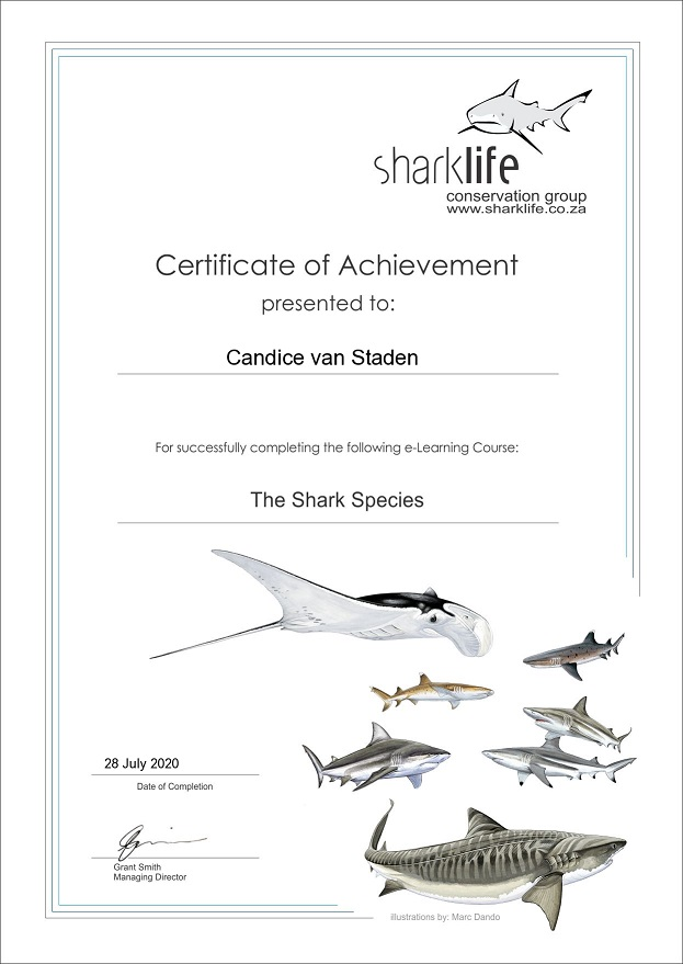 shark species cert
