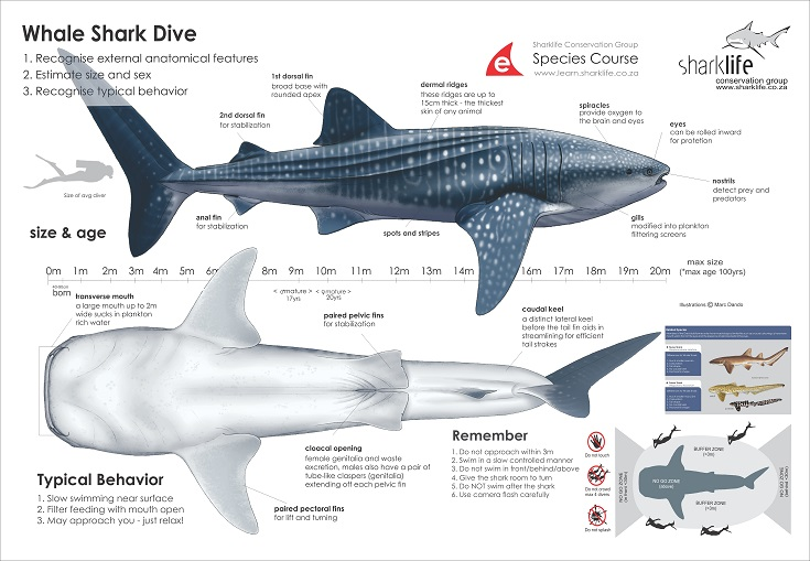 Briefing Bannners : Whale Shark Banner